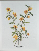 1503 Partridge pea Notes & Envelopes