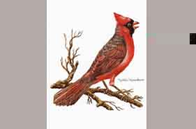1507 Cardinal Notes & Envelopes