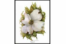1508 Dogwood Notes & Envelopes