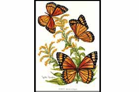 1510 Viceroy (Butterfly) Notes & Envelopes