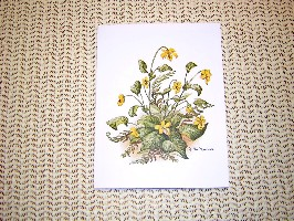 1512 Assorted Wildflower Notes and Envelopes